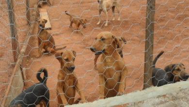 Photo of Com mais de 200 cachorros, abrigo São Lázaro de Jaboticabal está em processo de fechamento