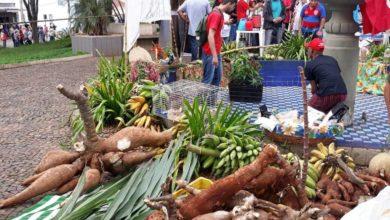 Photo of Governo Bolsonaro ordena paralisar a reforma agrária no país