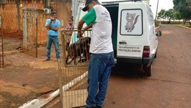 Photo of Departamento de Proteção Animal apresenta balanço das ações
