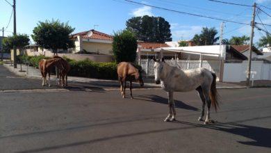 Photo of Perigo nas ruas de Jaboticabal