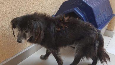 Photo of Consultora encontra cão surdo desaparecido há 10 anos e acha os donos