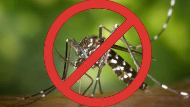 Photo of Dengue: visitadores do Programa Criança Feliz tratam do assunto com 600 famílias