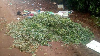 Photo of Prefeitura limpa e 24 horas depois população volta a jogar lixo em vários pontos da cidade