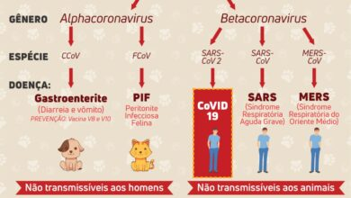 Photo of A face mais cruel do coronavírus é abandonar, sem nenhuma razão científica, os animais de estimação