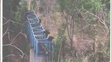 Photo of Ponte sobre o Córrego Cerradinho em Jaboticabal tem que obedecer a legislação vigente, diz ONG